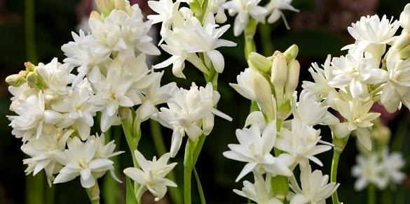 5 Jenis Bunga Pemanggil Makhluk Halus Kumpulan Info Unik